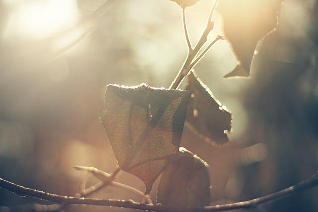leaves-690890_640