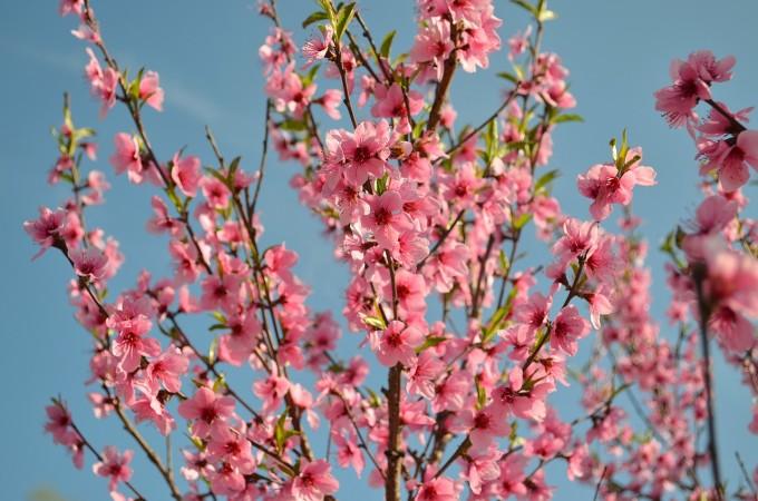 bloom-1039910_1280