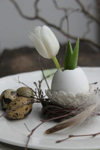tulip-600008_1280