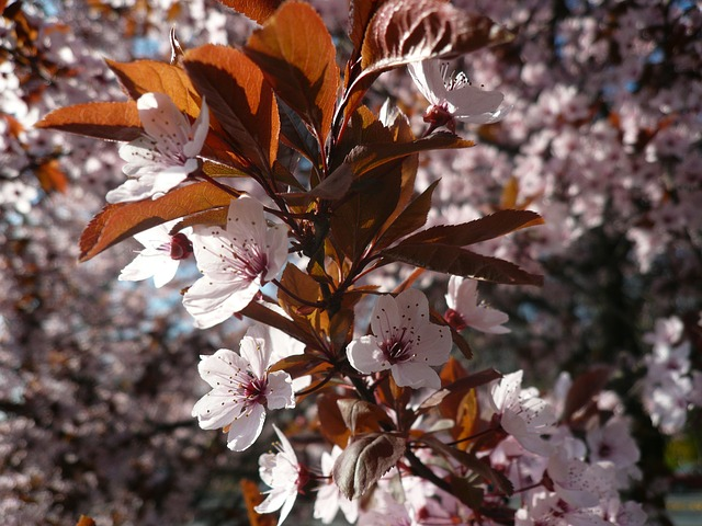spring-196366_640