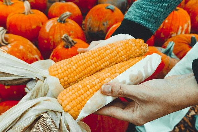 corn-978749_640