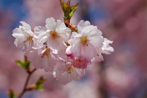 spring-1191637_640
