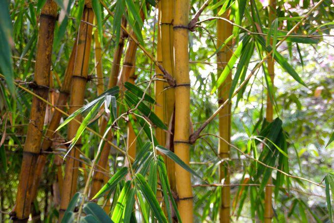 bamboo-1028699_1920