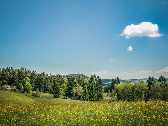 meadow-1437267_1920